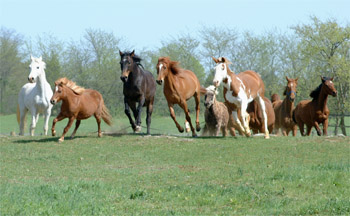 Horses runing in field